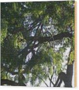 Mesquite Tangle Wood Print