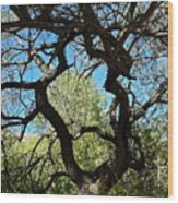Mesquite Window Wood Print