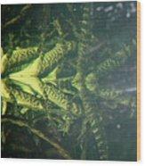 Mess O Caymans Wood Print