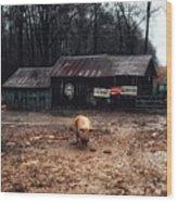 Messy Pig Farm Lot Wood Print