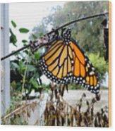 Metamorphosis Of The Monarch Wood Print