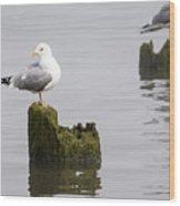 Mew Gull On A Piling Wood Print