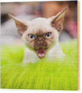 Mew Kitty Funny Mad Face Wood Print