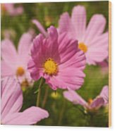 Mexican Aster Flowers 2 Wood Print