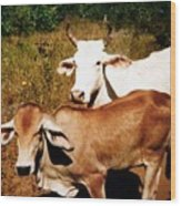 Mexican Cattle Wood Print