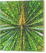 Mexican Fan Palm Leaf Wood Print