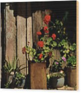 Mexican Geraniums Wood Print