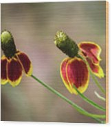 Mexican Hat Wood Print