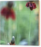 Mexican Hat Flower Wood Print