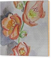 Mexican Poppies Wood Print