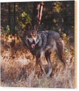 Mexican Red Wolf Wood Print