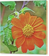 Mexican Sunflower Along White Pine Trail In Kent County, Michigan  Wood Print