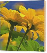 Mexican Sunflower Tree Wood Print