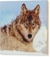 Mexican Wolf Painting Wood Print