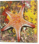 Mexico, Gulf Sea Star Wood Print