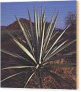 Mexico, Oaxaca, Field Of Agave Plants Wood Print