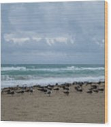 Miami Beach Flock Of Birds Wood Print