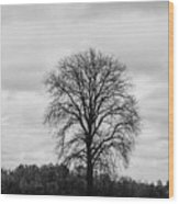 Michigan Lonley Tree  Wood Print