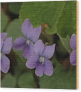 Michigan Purple Spring Flowers Wood Print