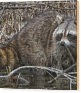 Michigan Raccoon Wood Print