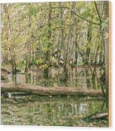 Michigan Swamp Wood Print