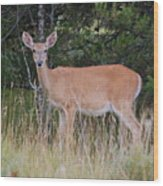 Michigan Whitetail Doe Wood Print