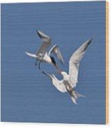 Mid Air Tern Battle Wood Print by Carl Jackson
