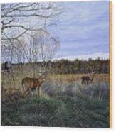 Take Out - Deer Wood Print