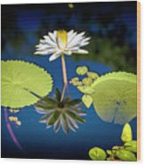 Mid Day Water Lily Reflection Wood Print