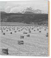 Mid June Colorado Hay  And The Twin Peaks Longs And Meeker Bw Wood Print