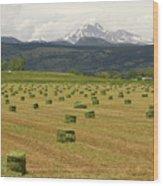 Mid June Colorado Hay  And The Twin Peaks Longs And Meeker Wood Print