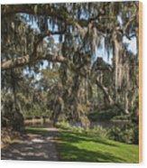 Middleton Live Oak Stretch Wood Print