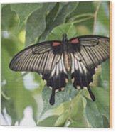 Midland Moth Wood Print