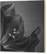 Midnight Blue Amy Bw Wood Print