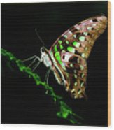 Midnight Butterfly Wood Print