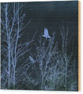 Midnight Flight Silhouette Blue Wood Print