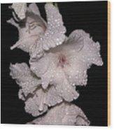 Midnite Aroma Wood Print