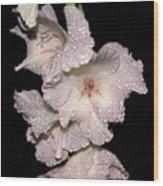 Midnite Aroma Pink Wood Print