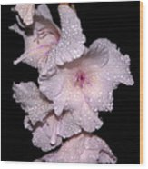 Midnite Aroma Purple Wood Print
