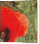 Midsummer Poppy Wood Print