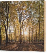 Midwest Forest Wood Print