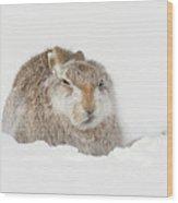 Miffed Mountain Hare Wood Print