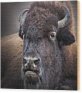 Mighty Bison Wood Print