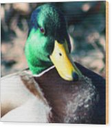 Mighty Duck Wood Print