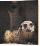 Mighty Masked Meerkat Wood Print