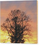 Mighty Oak At Sunset Wood Print