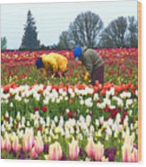 Migrant Workers In The Tulip Fields Wood Print