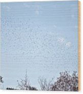 Migrating Birds Wood Print