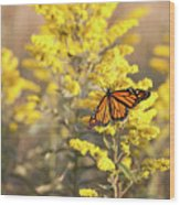 Migrating Monarch Butterfly Moses Cone Memorial Park North Carolina Wood Print