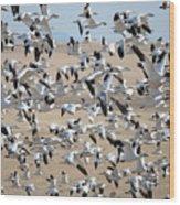 Migrating Snow Geese Wood Print